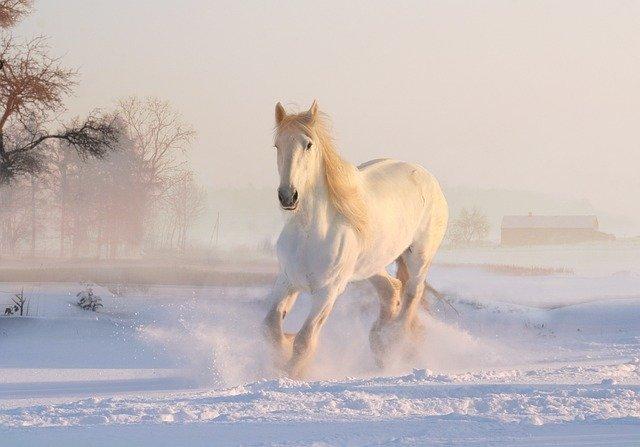 caballos famosos caballos famosos de carreras caballos famosos del mundo
