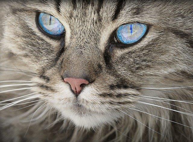 gato etimología