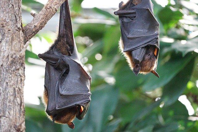 murciélago etimología